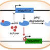 Evolutionary and Synthetic Biology: Design devices for addressed antiviral inhibition