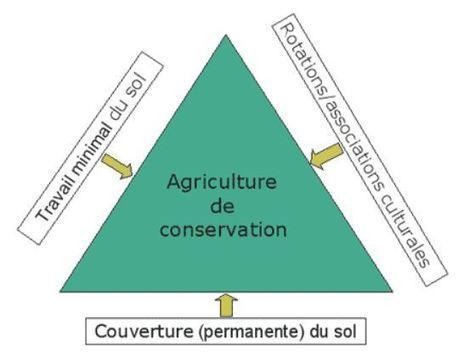 L'agriculture de conservation : des principes scientifiques à développer   AGRONOMIE VEGETAL   Scoop.it