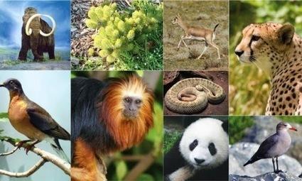 Día Internacional de la Diversidad Biológica | Agua | Scoop.it