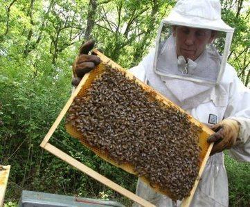 La chambre se mobilise pour les apiculteurs | Abeilles, intoxications et informations | Scoop.it