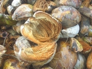 Fibra de coco como sustrato agrícola e hidropónico - Chile   Cultivos Hidropónicos   Scoop.it