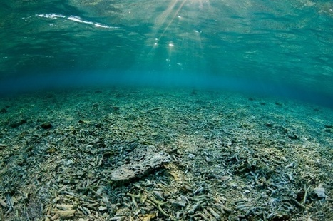 The high cost of ocean decline | All about water, the oceans, environmental issues | Scoop.it