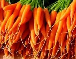 FreshFruitPortal.com | Syngenta teams up with Rijk Zwaan to boost innovation | Fruits & légumes à l'international | Scoop.it