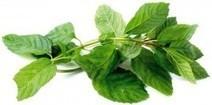Tres hierbas comunes en la cocina que ayudan a la salud - Blog de Farmacia | El perejil y sus usos tradicionales y medicinales | Scoop.it