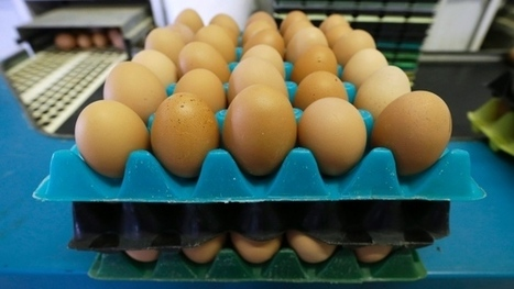 Loblaw, Metro, Sobeys, Walmart commit to 100 per cent cage-free eggs | Nova Scotia Business News | Scoop.it