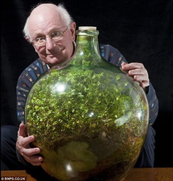 Thriving since 1960, my garden in a bottle: Seedling sealed in its own ecosystem and watered just once in 53 years | Container Gardening | Scoop.it