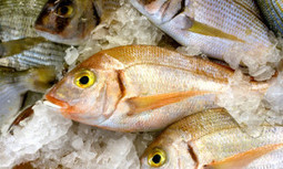 Will California Tackle Seafood Fraud Through Labeling Legislation? | EcoWatch | Scoop.it