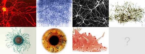 VC blog » Blog Archive » Natural Systems in VC | Data is Beautiful | Scoop.it