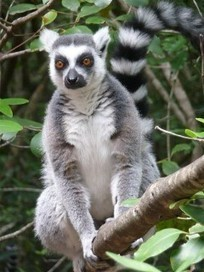 Madagascar et le WWF pour la protection de la biodiversité | Vern ... | Redaction Web Madagascar WEBTOO | Scoop.it