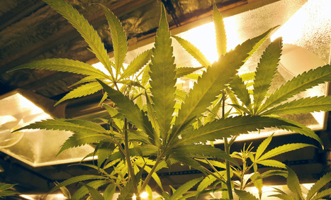 Minnesota Poll: Majority support legalization of medical marijuana | Gov & Law | Scoop.it