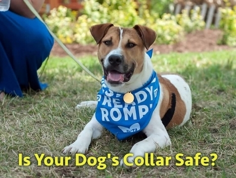 Is Your Dog's Collar Dangerous? | Introduce new course in schools called COMPASSION | Scoop.it