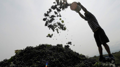 Wine ban forces Georgia's ancient vineyards to branch out | Vitabella Wine Daily Gossip | Scoop.it