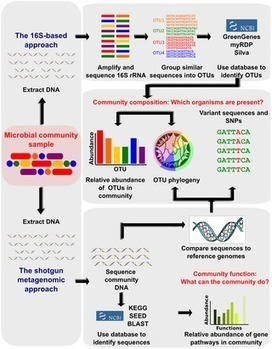 PLOS Computational Biology: Chapter 12: Human Microbiome Analysis | Systems biology and bioinformatics | Scoop.it