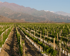 Argentine wine industry strives to expand internationally | Vitabella Wine Daily Gossip | Scoop.it