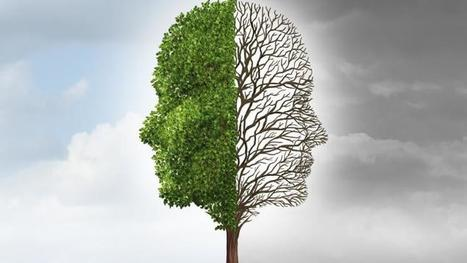 Daniel Willingham: Teachers experience cognitive dissonance over educational ... - TES News | Leadership, Innovation, and Creativity | Scoop.it