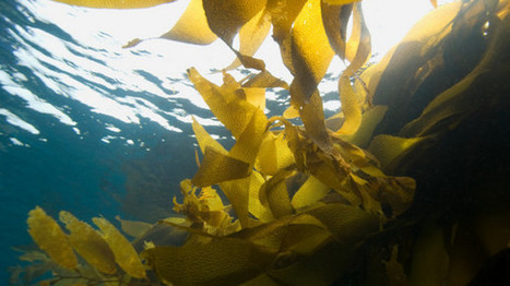 Seaweed - hugely favoured in cosmetics, sees high attendance at focused conference in Korea   Organic Beauty Trends   Scoop.it