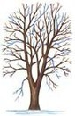 Pruning Trees: A Guide to Properly Prune a Tree | Tree Pruning Tips in Alpharetta GA | Scoop.it