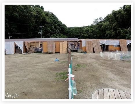 Dogwood, refuge des chiens et chats sinistrés   Journal de Flo et ses Corgis   Japon : séisme, tsunami & conséquences   Scoop.it