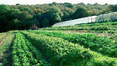 Land farmed organically reaches seven-year low - Farmers Weekly | OrganicNews | Scoop.it