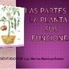 Plantas y alimentos