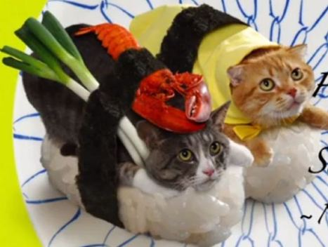 Japanese firm dresses cats like sushi | Interesting 123 | Scoop.it