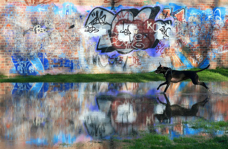 Dog Jumps Graffiti Pool | Modern Ruins | Scoop.it