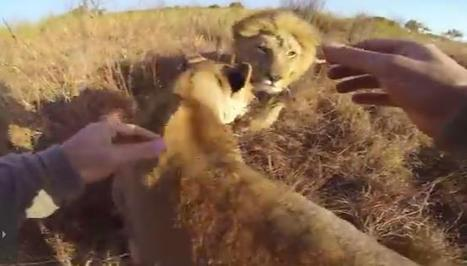 The Best Social Media Storytelling Throws Customers To The Lions | FAVORITES | Scoop.it