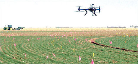 US: Scientist uses helicopter drone to detect wheat-disease progression | Plant Biology Teaching Resources (Higher Education) | Scoop.it