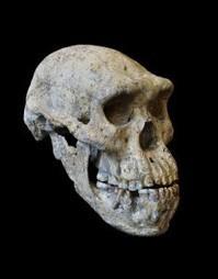 Un cráneo para unirnos a todos | Enseñar Geografía e Historia en Secundaria | Scoop.it