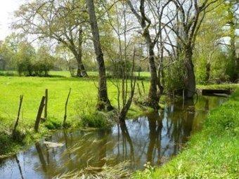 Les zones humides face aux Grands Projets inutiles   Nord Franche-Comté écologie   Scoop.it