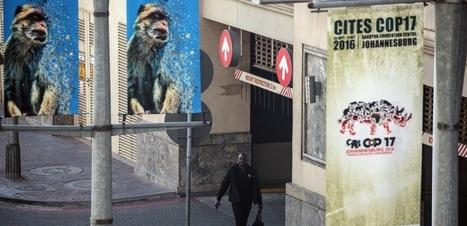 Ouverture d'une conférence mondiale sur les espèces menacées à Johannesburg | Biodiversité | Scoop.it