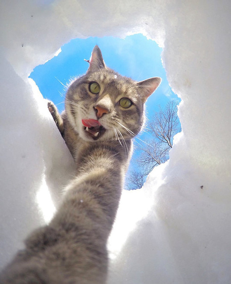 This Selfie Taking Cat Takes Better Selfies Than You | @FoodMeditations Time | Scoop.it