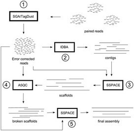 PLOS ONE: An Integrated Pipeline for de Novo Assembly of Microbial Genomes | BCE | Scoop.it