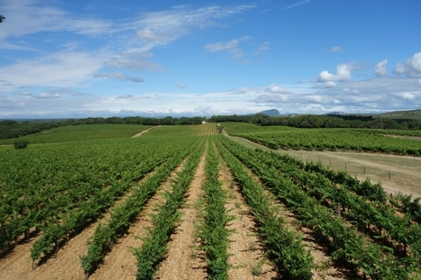 A Guide to the Minervois and the surrounding area | Blog | Winerist | Visit Haut Minervois | Scoop.it