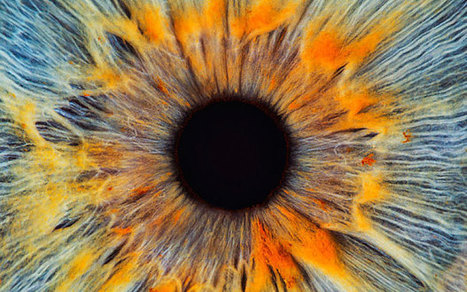 Does the human eye prove that God exists? - Telegraph.co.uk | Optometry | Scoop.it