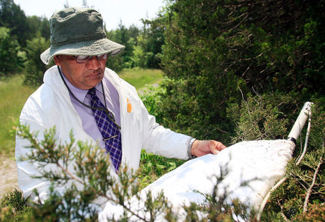 Climate change bringing more ticks, infections | Local | News | The Belleville Intelligencer | Sustain Our Earth | Scoop.it