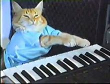 Hot Christmas Toy Alert: Keyboard Cat (Video) | Weird News and Celebrity Gossip by Tom Rose | Scoop.it