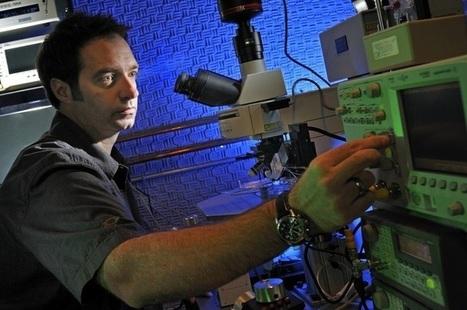 Aumentan la percepción humana aplicando ultrasonidos en el cerebro | Cuerpo, Mente, Espíritu y Universo | Scoop.it