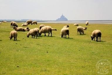 Quels vins pour accompagner l'agneau de Pâques ? | Offrir un cadeau express de qualité | Scoop.it