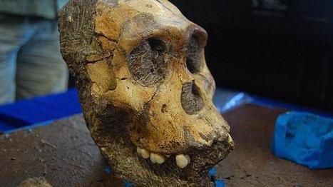 Evolución. Cambio metabólico hace 85.000 años posibilitó aumentar nuestrocerebro. | Educar con las nuevas tecnologías | Scoop.it