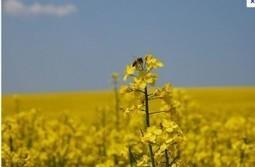 générations-futures » Néonicotinoïdes: Stop à l'intox du lobby européen de l'agriculture intensive ! | Abeilles, intoxications et informations | Scoop.it