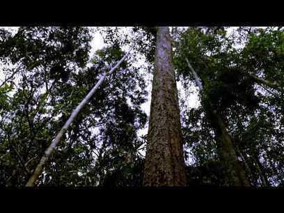 10 vídeos en homenaje al Día Mundial de la Vida Silvestre | Agua | Scoop.it