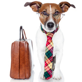 Do's and don'ts of Take Your Dog to Work Day | Edu's stuff | Scoop.it