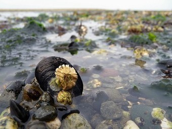 New Research on Ocean Acidification and Warming Oceans Reveals Heavy Toll on Marine Life | Vertical Farm - Food Factory | Scoop.it