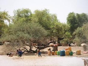 Mali : de la campagne agricole à la campagne électorale | Questions de développement ... | Scoop.it