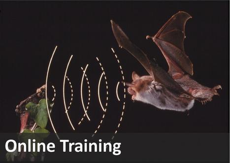 National Bat Monitoring Programme - Bat Conservation Trust | Agua | Scoop.it