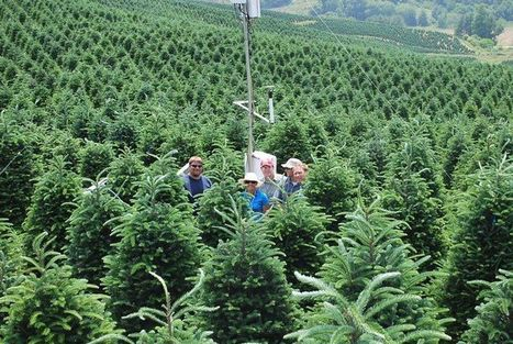 NC State University Christmas Tree Research and Extension Programs | Research from the NC Agricultural Research Service | Scoop.it
