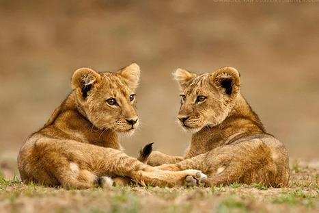 Best Wildlife Photography | Everything Photographic | Scoop.it