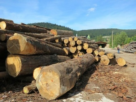 Filière Bois : un rapport pour identifier des projets stratégiques   Emploi formation   Scoop.it