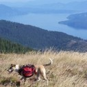 Blog Archive » Some North Idaho Dog-Friendly Hiking Trails | Hiking With Rallyin! | Scoop.it